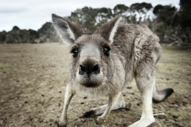 Cuki állat képek minden korosztálynak