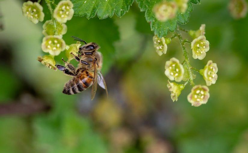 A méhpempő kivételesen sokoldalú táplálék